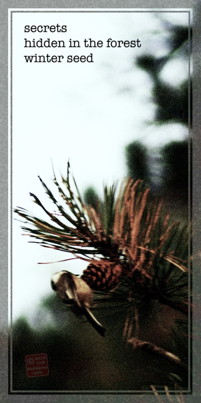 ©12 Pine Cone Chickadee with Haiku