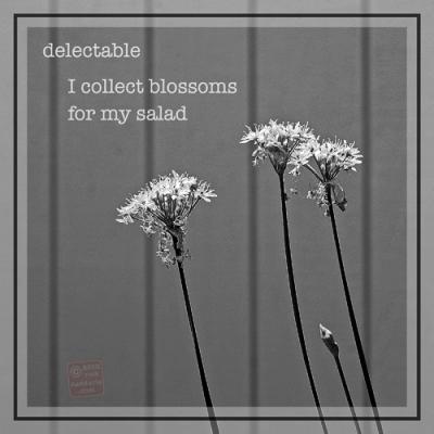 ©12 Garlic Chive Blossoms with Haiku