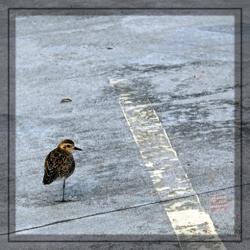 ©13 Bird on One