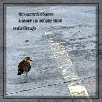 ©13 Bird on One with Haiku