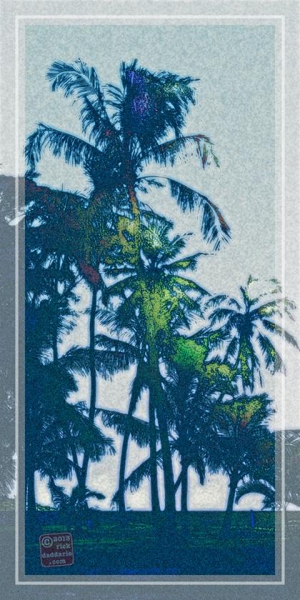 ©13 Sun Black Palms 7 sml6x