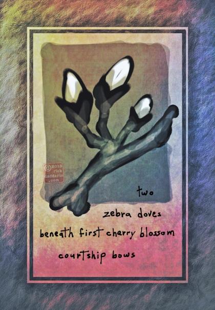 ©13 Zebra Dove Cherry Blossoms 2 sml6x
