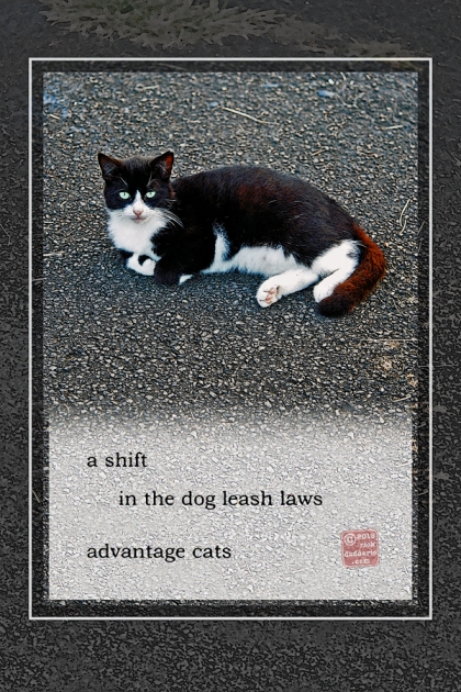 ©13 Easy Cat 5 sml 6x