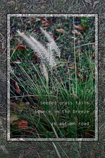 ©13 Grass Tails 3 sml 6x