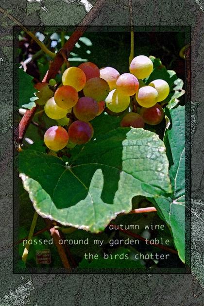 ©13 Autumn Grapes 3 sml 6x