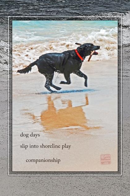 ©13 Sea Dog Stick 4 sml 6x