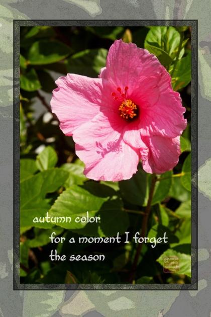 ©13 Forgotten Autumn 3 sml 6x