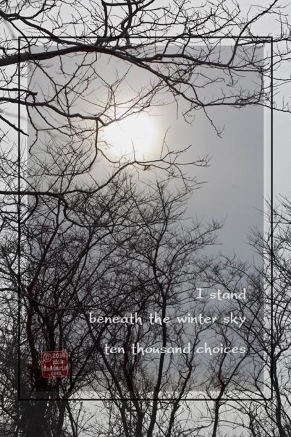 ©14 Branching Trees 3 sml 6x