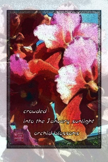 ©14 Crowded 3 sml 6x