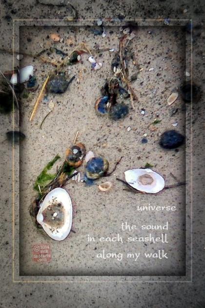 ©14 Sea Shell Nature 4 sml 6x