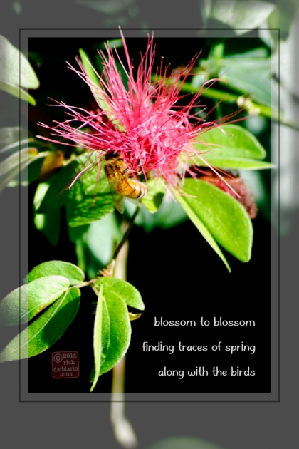 ©14 Red Blossom Bee 3 sml 6x