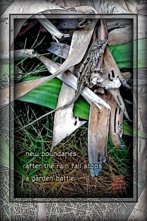 ©14 Garden Battle 3 sml 6x