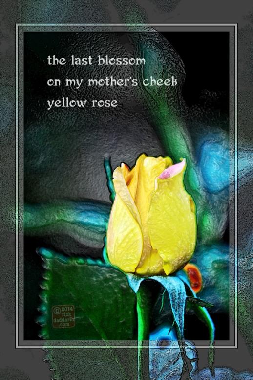 ©14 Last Blossom 2 sml 6x