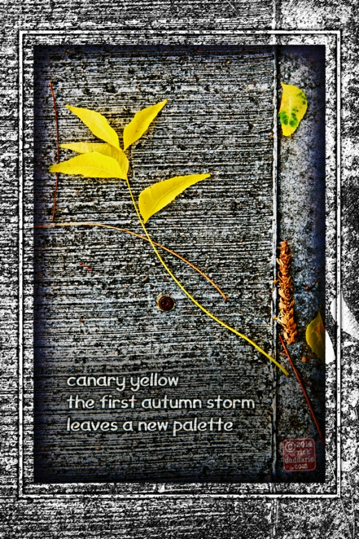 ©14 Canary Yellow Leaves 4 sml 6x