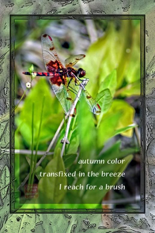 ©14 Dragonfly Autumn 5 sml 6x