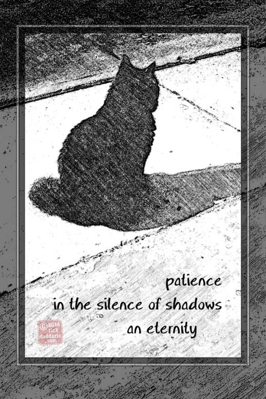 ©14 cat silence 3 sml 6x