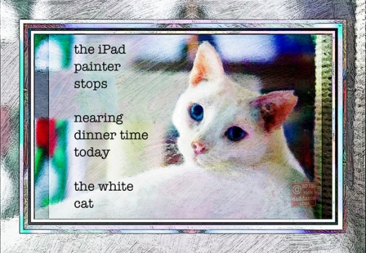 ©2015 iPad painter white cat 2 sml 6x