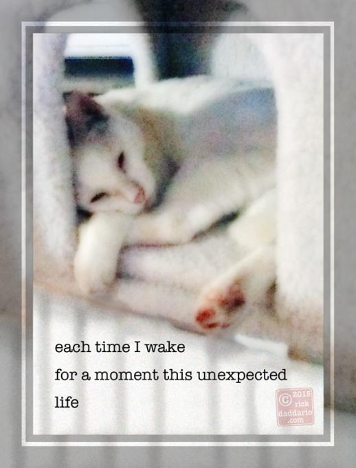 ©2015 sleeping cat 3 sml 6x