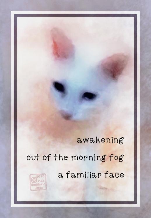 ©2016 face fog 2 sml 6x