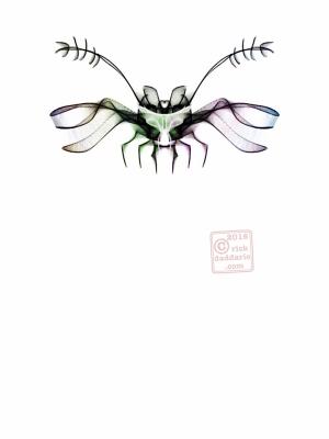 ©2016 night bug 1 sml 6x