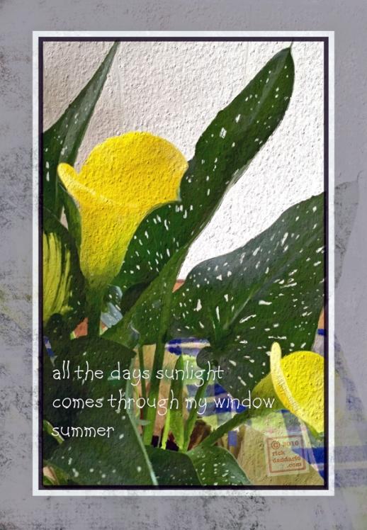 ©2016 sunlight window 1 sml 6x