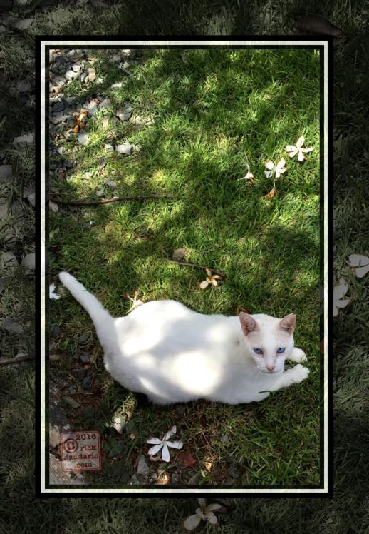 ©2016 fallen plumeria cat 1 sml 6x