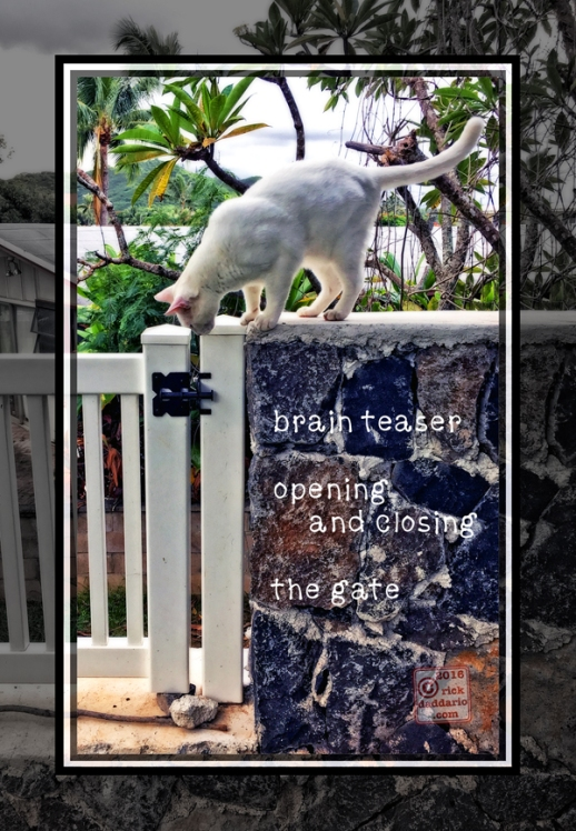 ©2016 rock column cat 2 sml 6x