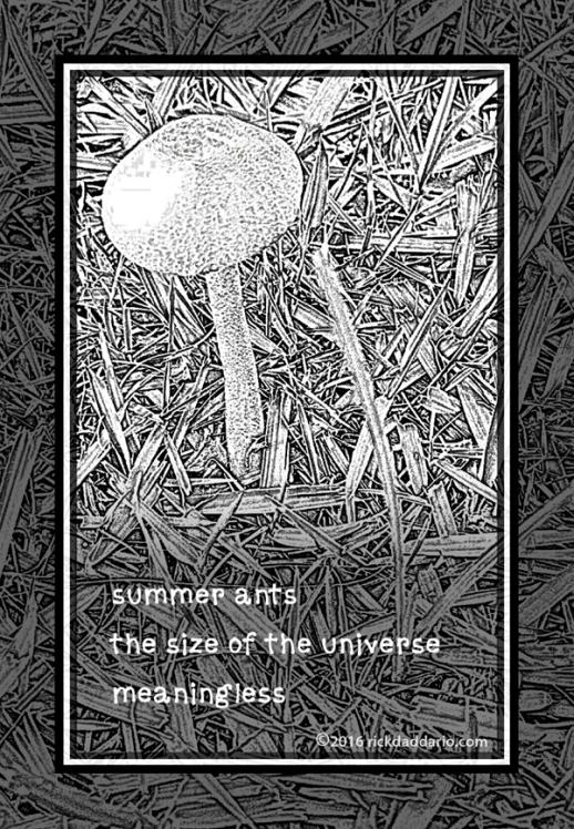 ©2016 summer mushroom 2 sml 6x