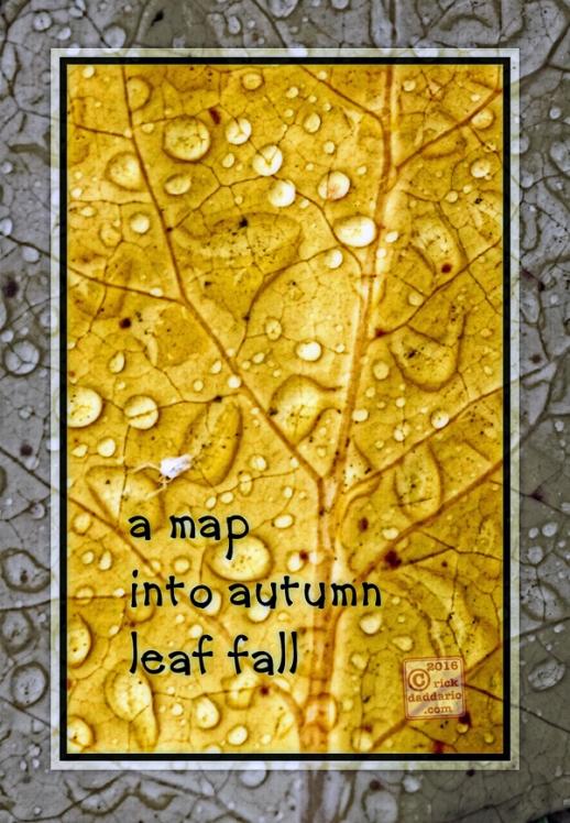 2016-autumn-map-yellow-1-sml-6x