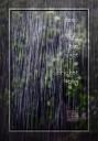 2016-night-nature-1-sml-6x