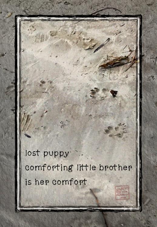 2017-lost-puppy-1-sml-6x