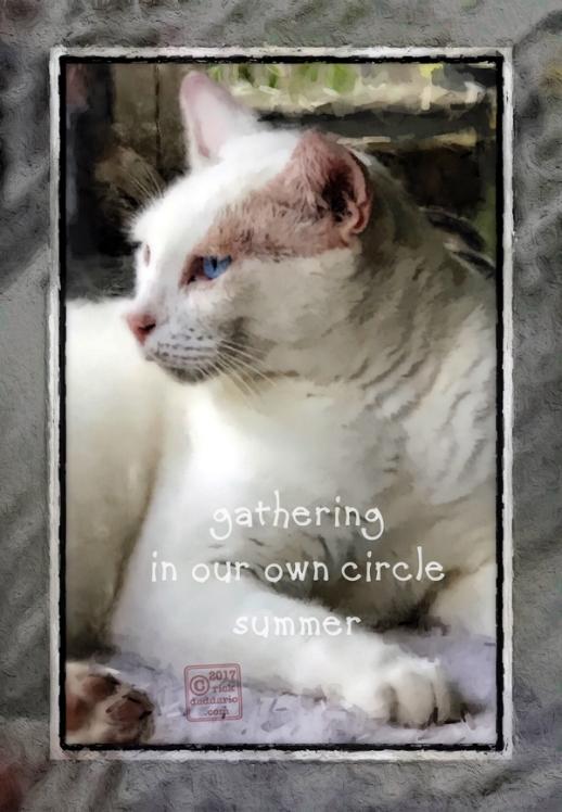 ©2017 cat companion 1 sml 6x