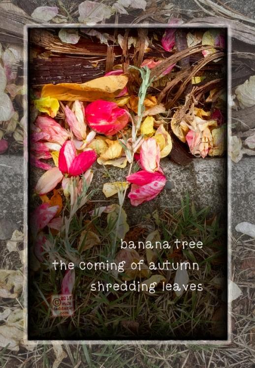 ©2017 leaf shredding 1 sml 6x