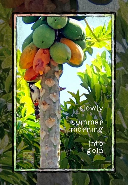 ©2017 papaya birds 1 sml 6x